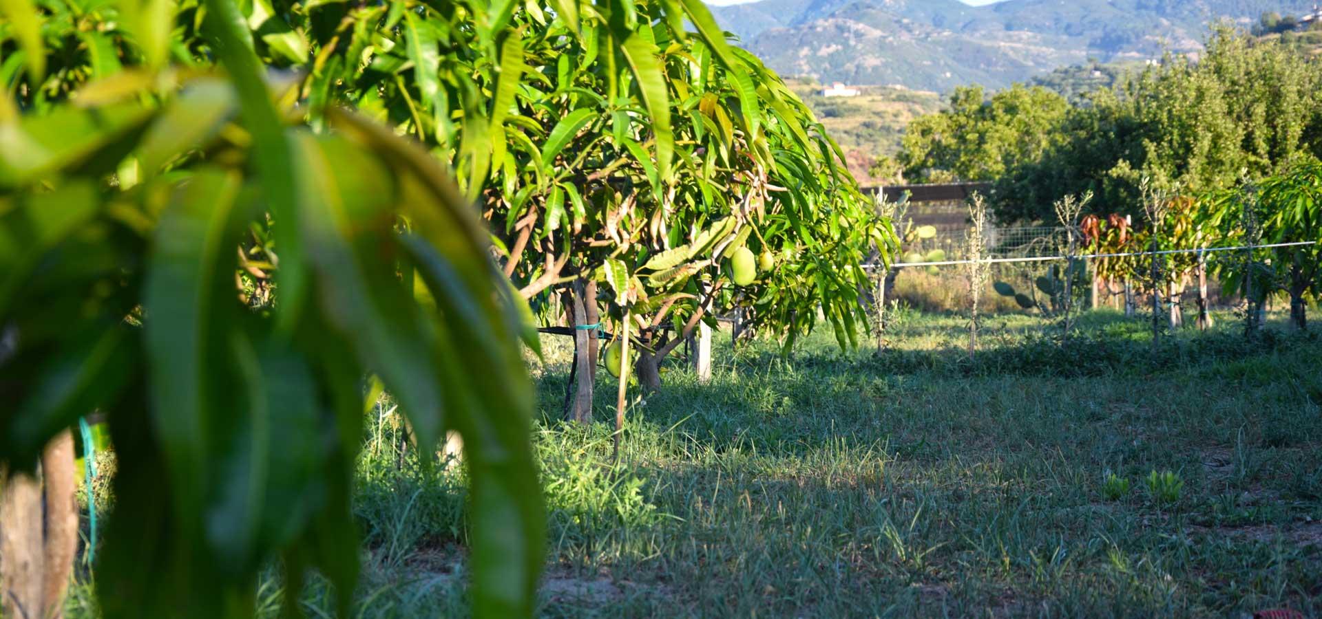Impianti per l'irrigazione agricola: tipologie e caratteristiche dei sistemi irrigui più diffusi