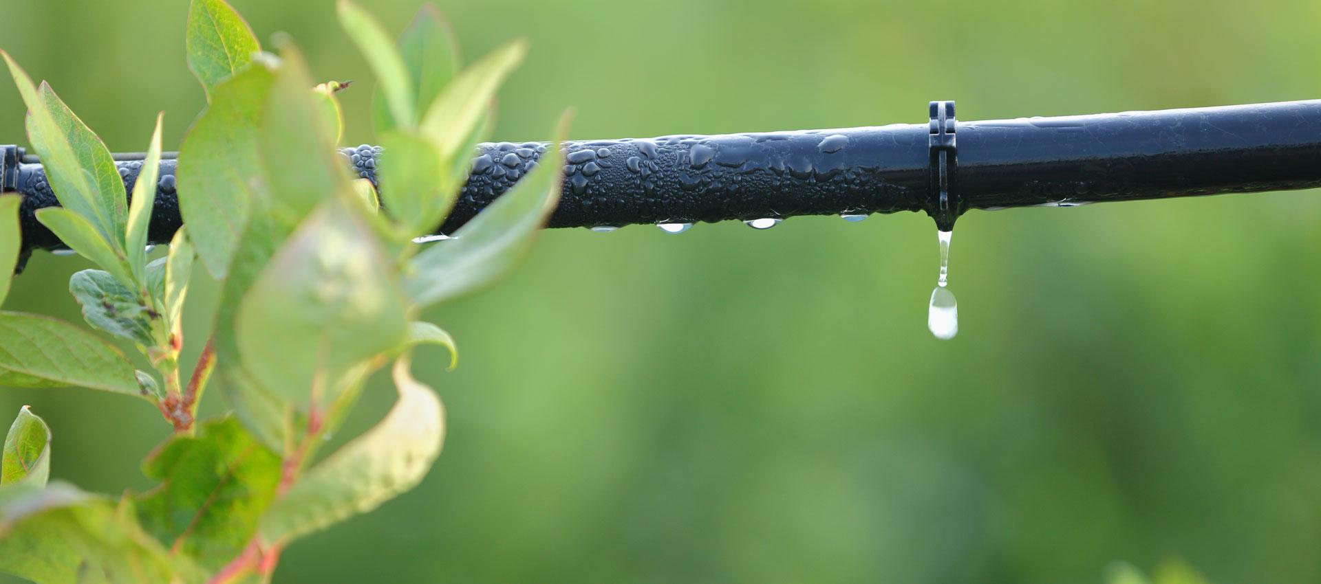 Irrigazione a goccia: tutti i vantaggi per il tuo giardino e per le tue piante