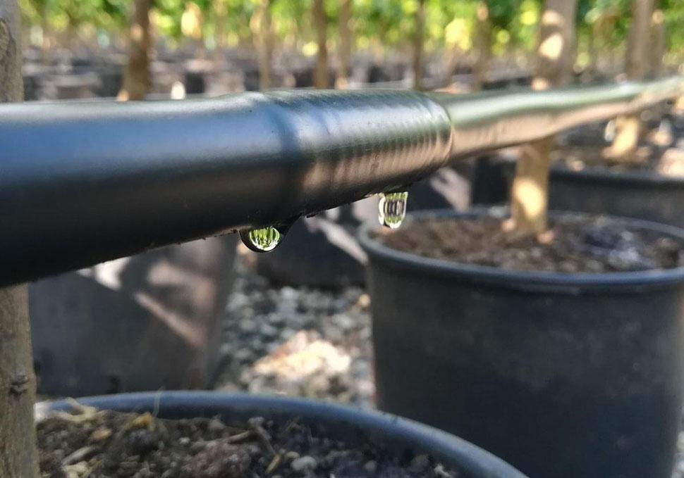 Irrigazione invernale: <br>intervista all'agronomo
