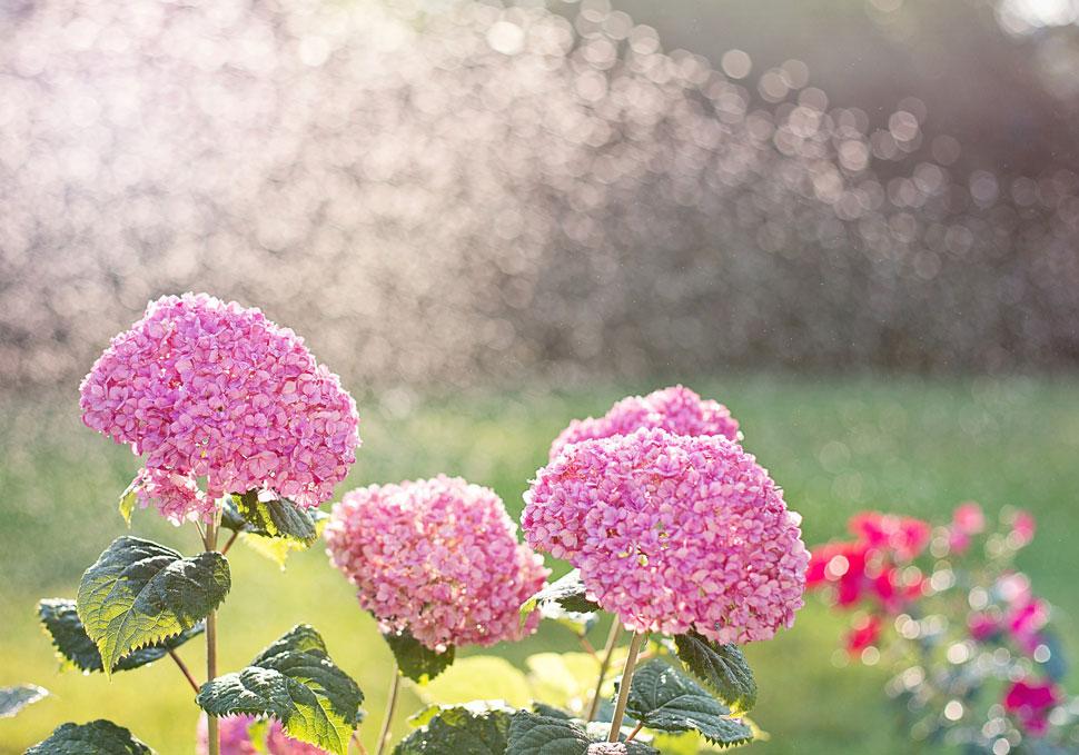 Cura giardino primavera - SATI